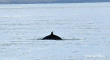 <h5>Husavik, les baleines</h5>