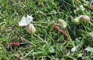 <h5>Vik, la flore</h5>