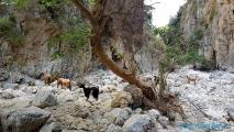 <h5>Crète - Rando Gorges de Deliana</h5>